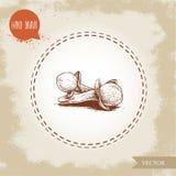 Lotto disegnato a mano dei semi di fiore della spezia del chiodo di garofano di stile di schizzo Spezia fatta a mano ed erbe di v Fotografia Stock