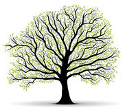 Lotto verde dei fogli, profilo dell'albero di vettore illustrazione vettoriale