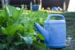 Lotus για το πότισμα των λαχανικών στον κήπο Στοκ Φωτογραφία