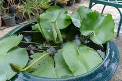 Lotus η ντάλια, Canna Ταϊλάνδη Στοκ φωτογραφίες με δικαίωμα ελεύθερης χρήσης