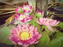 Lotus στα έλη φύσης, εκλεκτής ποιότητας ύφος στοκ φωτογραφίες