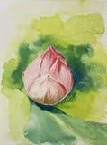 Lotus στο watercolor Στοκ Εικόνες