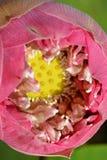 Lotus του Διαφωτισμού Στοκ εικόνες με δικαίωμα ελεύθερης χρήσης