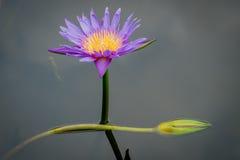 Lotus, όμορφο, καλοκαίρι, ροζ, φύση, ομορφιά, λουλούδι, phalaenopsis, τροπικό, λουλούδια, πράσινα, διακόσμηση, orquidea, natur Στοκ φωτογραφία με δικαίωμα ελεύθερης χρήσης