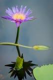 Lotus, όμορφο, καλοκαίρι, ροζ, φύση, ομορφιά, λουλούδι, phalaenopsis, τροπικό, λουλούδια, πράσινα, διακόσμηση, orquidea, natur Στοκ φωτογραφίες με δικαίωμα ελεύθερης χρήσης