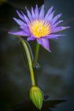 Lotus, όμορφο, καλοκαίρι, ροζ, φύση, ομορφιά, χρώμα, λουλούδι, phalaenopsis, τροπικό, λουλούδια, πράσινα, διακόσμηση, orquidea, n Στοκ Εικόνες