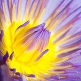 Lotus 1 αριθ. 55 Στοκ Εικόνες