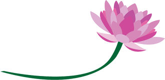 Lotus. Flower symbolizes the purity of heart and mind, long life, health, honor and good luck royalty free illustration