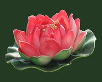 Lotus. Red lotus artificial flower in green background. Lotus clipping path included Stock Photography