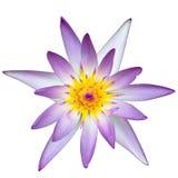 Lotus. Pink white and yellow lotus Royalty Free Stock Image