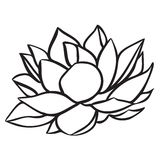 Lotus illustration stock