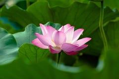 Lotus Images stock