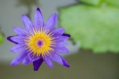 Lotus Image stock