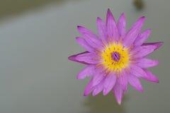 Lotus. Purple lotus in cloudy day Royalty Free Stock Photo