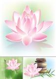 Lotus stock abbildung