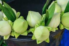 Lotus Stockbilder