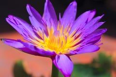 Lotus Lizenzfreies Stockbild