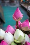 Lotus Zdjęcie Royalty Free