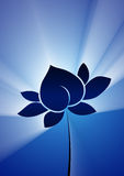 Lotus. In white ray on blue background Stock Photo