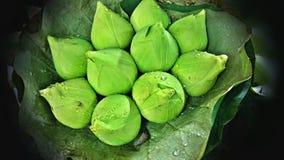 Lotus Royaltyfria Foton
