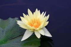 Lotus Stock Foto's