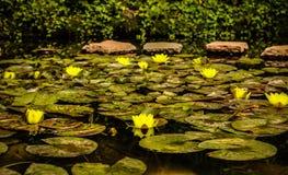 Lotus arkivbilder