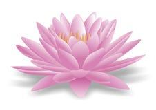 Lotus бесплатная иллюстрация