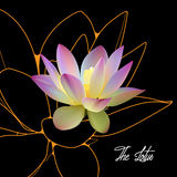 Lotus ελεύθερη απεικόνιση δικαιώματος