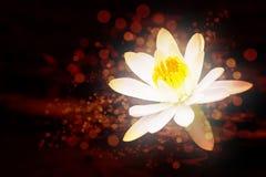Lotus abstrait Image libre de droits
