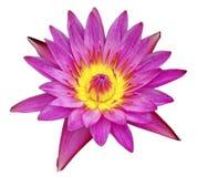Lotus aisló Imágenes de archivo libres de regalías