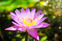 By the Lotus is also a representative of the religion and the enlightened. In addition to the 5 types of flowers the other flowers also considered auspicious Stock Photos