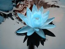 Lotus azul Fotografía de archivo libre de regalías