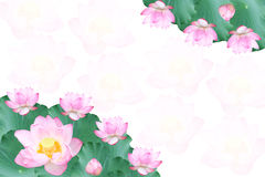 Lotus background. The frame of the Lotus flowers and leaves Stock Photos