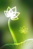 Lotus background. Stock Photo