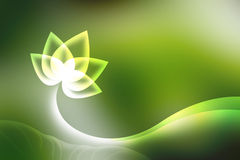 Lotus background. Royalty Free Stock Photo
