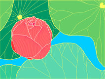 Lotus Background Fotografía de archivo