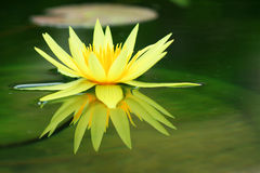 Lotus background blur. Royalty Free Stock Image