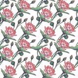Lotus Background Estampado de flores con los lirios de agua aislados en el fondo blanco Imagen de archivo