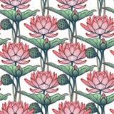 Lotus Background Estampado de flores con los lirios de agua en el fondo blanco Foto de archivo libre de regalías