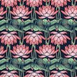 Lotus Background Estampado de flores con los lirios de agua en el fondo blanco Fotografía de archivo libre de regalías
