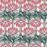 Lotus Background Estampado de flores con los lirios de agua en el fondo blanco Imágenes de archivo libres de regalías