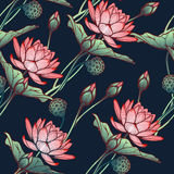 Lotus background. Floral seamless pattern with water lilies  on deep blue background. Royalty Free Stock Photo