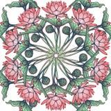 Lotus Background Modèle floral avec des nénuphars d'isolement sur le fond blanc Image stock