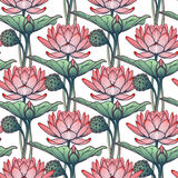 Lotus Background Modèle floral avec des nénuphars sur le fond blanc Photo libre de droits