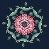 Lotus Background Ornamento decorativo floral del vector Los lirios de agua arrenged en guirnalda circular en fondo azul profundo Imagen de archivo
