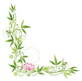 Lotus, bamboo Royalty Free Stock Photography