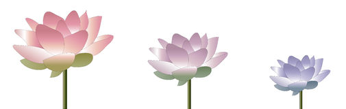 Lotus Banner Stock Image