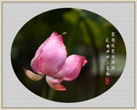 lotus and bee with classical Chinese poetry, traditional Chinese painting style. royalty free stock image