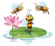 Lotus and bees Stock Photo