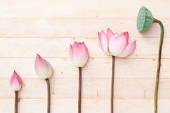 lotus bhuddism Stock Photography